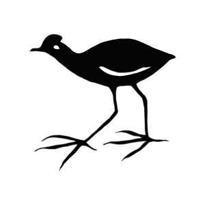 "The "" Jacana"" is an African bird."